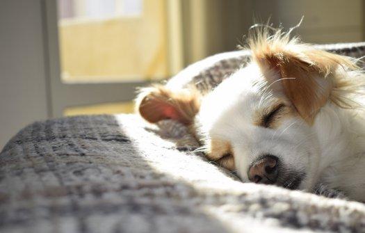 Jak wybrać odpowiednie legowisko dla psa?