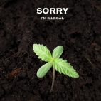 Sorry,I'm illegal