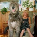 Biggest dogs on the world