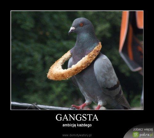 Znalezione obrazy dla zapytania Gangsta Gołąb