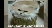 funny cats 2